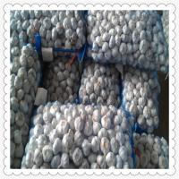 SUPER GARLIC NEW CROP raw material agricultural product