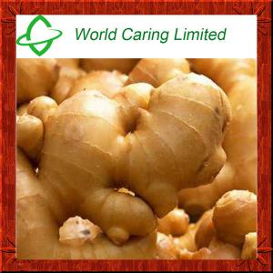 China High Purity herbal ingredient pure natural tumeric Extract 95% Curcumin HPLC on sale
