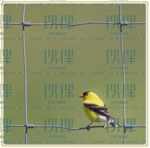 China China supplier, Cheap Galvanized hinge joint field fence, cattle fence on sale