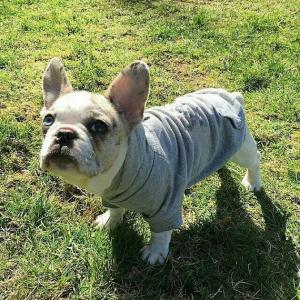 China cheap fleece dog hoodie pet apparel factory wholesale in cheap price on sale