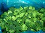 Florets dos brócolis de Iqf