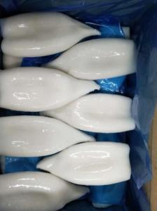 China chinese squid processor squid tube factory low price stock calamari tube on sale