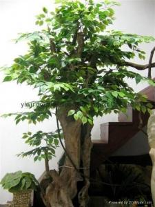 China Artificial Plants on sale