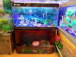 water trickling series aquarium, fish tank, custom made according to your sizes, factory price, factory lead time,