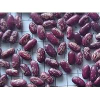 China Purple Speckled Kidney Bean on sale