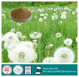 China GMP 100% Natural Dandelion root extract on sale