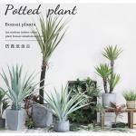 ISO Desert Snake Plant Artificial Bonsai Tree Tiger Piran Aloe Sansevieria Seeds
