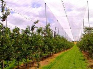 Hdpe Raschel Knitted Anti Hail Nets / Hail Protection Net For Fruit