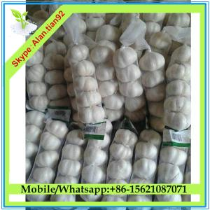 China Chinese Natural garlic price, Fresh natural garlic on sale