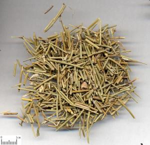 China Natural dried HERBA EPHEDRAE cheap price 500g/bag for sale from China supplier on sale