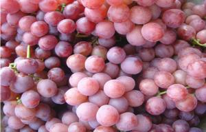 China Fresh Victoria Red Globe Grapes Thin Skin , Sweet Flesh For Children / Kids on sale
