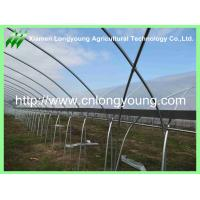Economical Gutter-connected Plastics Greenhouse Agricultural