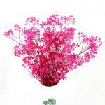 Preserved Gypsophila Baby'S Breath , Dried Gypsophila Wedding Table Flowers