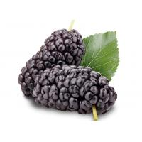 China Nutritional Sugar Control Supplements Organic Mulberry Powder Improve Vision on sale