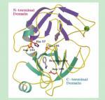 Recombinant Human Trypsin Lyophilized Powder , Human Trypsin Supplier