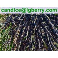China Natural Acai Berry Extract 5%-70%Anthocyanin/acai berry extract on sale