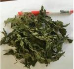 Dried peppermint leaf; peppermint leaf; mentha leave;Organic Peppermint leaf