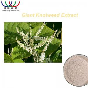 China Weight Loss Chinese Knotweed Extract , Polygonum Cuspidatum Root Extract on sale