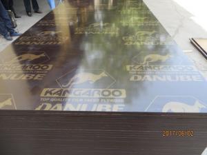 China KANGAROO BRAND FILM FACED PLYWOOD, POPLAR CORE, WBP MELAMINE GLUE, BROWN  PRINTED FILM on sale