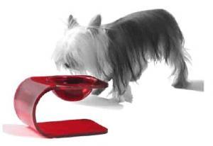 China Modern Red 10mm Acrylic Pet Bowl , Dog / Cat Feeding Bowl on sale