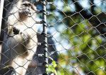 Diamond Hole Stainless Steel Ferrule Rope Mesh For Zoo Animal Enclosure Netting