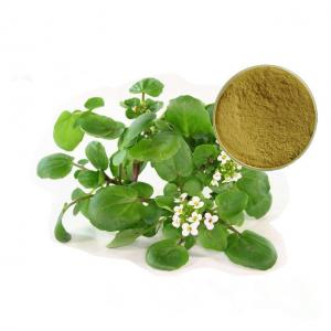 China Whole Herb Plant Extract Powder Watercress Extract Nasturtium Officinale on sale