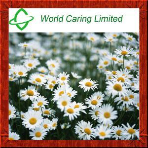 China Cosmetic Ingredient Chamomile Extract Apigenin 1.2%-98% HPLC on sale