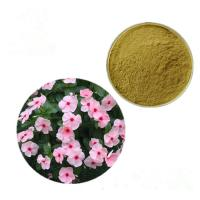 China Increase Blood Flow Vinca Rosea Periwinkle Extract /Catharanthus Roseus Extract on sale