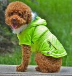 Vária roupa do cão do verde do projeto