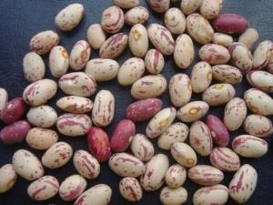 China Light Speckled Kidney Beans on sale