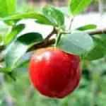 Extrato do Acerola