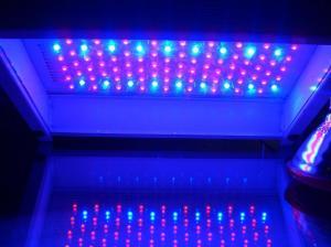 China 100w NEW led grow light on sale