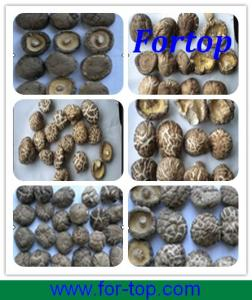 China Varieties of New Crop Dried Shiitake Mushroom for British on sale