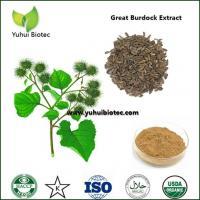 China arctium lappa p.e,Burdock Seed Extract,burdock extract,burdock root extract on sale