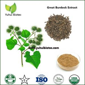 China arctium lappa p.e,Burdock Seed Extract,burdock extract,burdock root extract on sale
