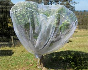 China Fruit Tree Net, 20-50mesh,0.5-6.0m,green and white,protect the trees,Agricultural Plastic Products on sale