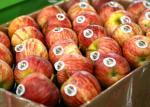 食糧フルーツの習慣によって印刷されるシールの塗被紙の取り外し可能な接着剤