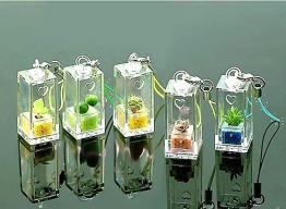 China Pet Tree 5 (Mini Plant, Pet Plant) as Mobile Phone Strap or Key Strap on sale
