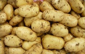China Minerals India Organic Potato Heath Benifits For Vegetable Market on sale