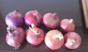 China 5cm Blood Pressure Reducing Natural Fresh Onion on sale