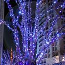 China 12v LED Christmas Light on sale