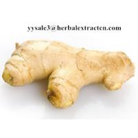 Ginger Extract,Black ginger Extract, Gingerol 5% 6% HPLC, 10:1, CAS No.: 1391-73-7, blood stimulant and cleansing,nature