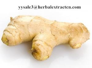 China Ginger Extract,Black ginger Extract, Gingerol 5% 6% HPLC, 10:1, CAS No.: 1391-73-7, blood stimulant and cleansing,nature on sale