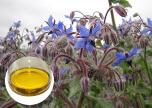 China Borage Seed Organic Plant Oils Omega 6 GLA Anti Oxidation For Eczema on sale