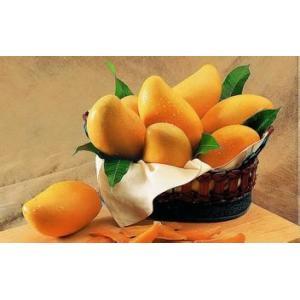 China L'extrait de graine de mangue sauvage, 10:1, la flavone 10%, la protéine 25%, l'albumine 7%, fibre alimentaire, commandent l'hypertension on sale
