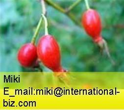 China rose hip concentrate  on sale