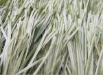Césped artificial de la hierba Thiolon del fútbol al aire libre bicolor verde de Oliverio