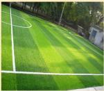 hot selling Anti-uv, permeable water and easy recycle and installation Rugby 20-50mm  PE Material Artificial Grass