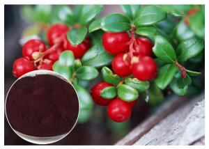 China Dark Red Powder Antifungal Plant Extracts PACs From Cranberry Anti Radiation on sale