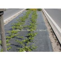 China Home Use PE PP Woven Garden Ground Cover Fabric / Weed Mat , Black on sale
